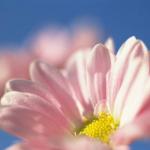 キムタク「世界に一つだけの花」との出会いを語る